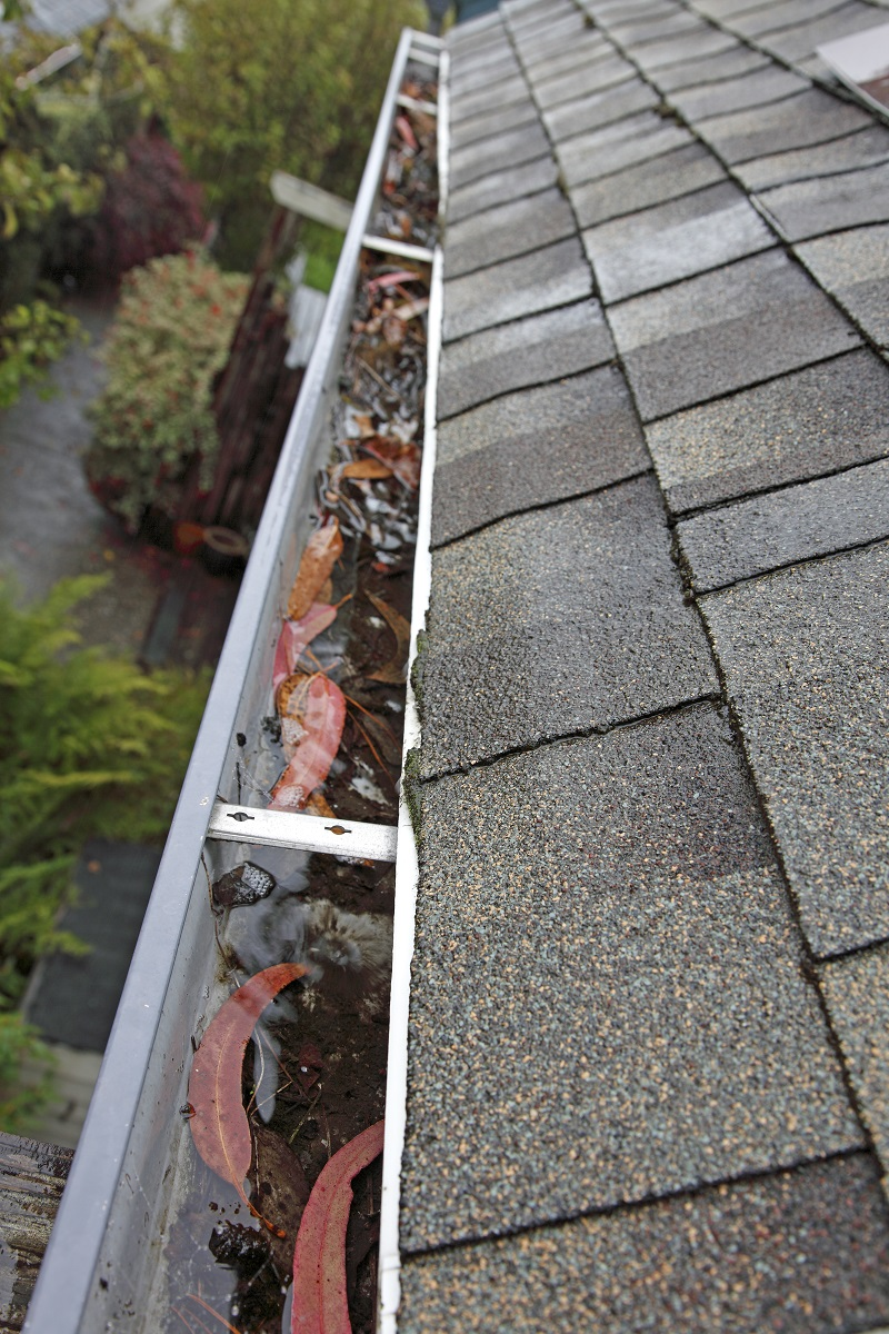 gutter clogged with leaves resulting in standing water after rain