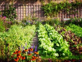 A variety of edible plants growing in front and up a brick wall.