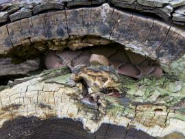 snake hiding in an old log